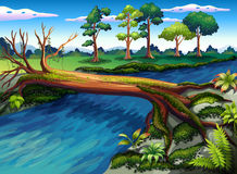 Een boom met algen bij de rivier royalty-vrije illustratie