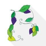 Illustratie van een bos van geïsoleerde druiven Stock Afbeelding