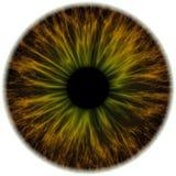 Illustratie van een bruin met groene menselijke iris Digitaal kunstwerk c Royalty-vrije Stock Foto's