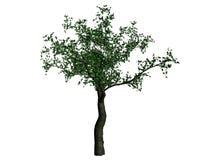Illustratie van een kersenboom vector illustratie