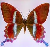 Illustratie van een kleurenvlinder, gemengde middelgrote, zwarte backgro Royalty-vrije Stock Foto