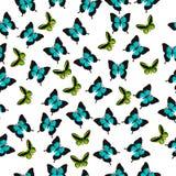 Illustratie van een kleurrijke vlinder Stock Afbeeldingen