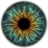 Illustratie van een menselijke iristextuur Stock Foto's