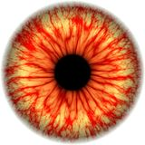 Illustratie van een menselijke iristextuur Royalty-vrije Stock Afbeelding