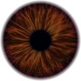 Illustratie van een menselijke iristextuur Royalty-vrije Stock Fotografie