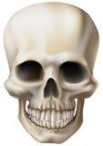 Illustratie van een menselijke schedel Stock Fotografie