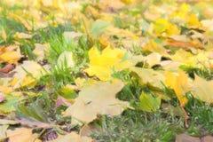 Illustratie van gele de herfst mapple bladeren op groen gras royalty-vrije stock fotografie