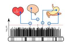 Illustratie van genoom-brede verenigingsstudies Royalty-vrije Stock Foto