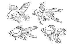 Illustratie van goudvissen Stock Foto