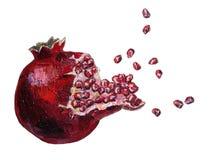 Illustratie van granaatappel Royalty-vrije Stock Foto