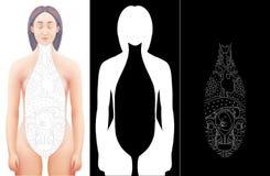 Illustratie van hand getrokken accijns gelegd op vrouwelijk anatomiemodel Royalty-vrije Stock Fotografie