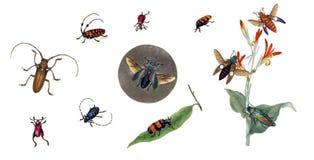 Illustratie van insecten op een witte achtergrond Stock Foto's