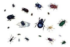 Illustratie van insecten op een witte achtergrond Royalty-vrije Stock Fotografie