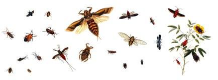 Illustratie van insecten op een witte achtergrond Royalty-vrije Stock Foto's