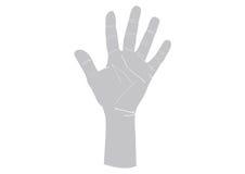 Illustratie van linker menselijke hand Royalty-vrije Stock Fotografie