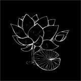 Illustratie van lotusbloembloem in stijl Zwart-wit lotusbloempatroon Krijt op een bord vector illustratie