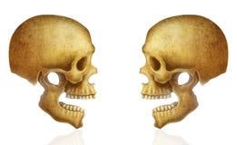 Illustratie van menselijke schedel Stock Foto's