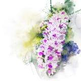 Illustratie van mooie bloesemorchidee Royalty-vrije Stock Foto