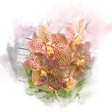 Illustratie van mooie bloesemorchidee Royalty-vrije Stock Fotografie
