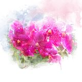 Illustratie van mooie bloesemorchidee Stock Fotografie