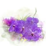 Illustratie van mooie bloesemorchidee Stock Afbeelding