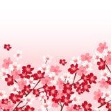 Illustratie van mooie kersenachtergrond Stock Foto