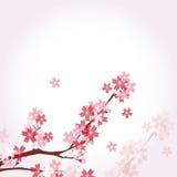 Illustratie van mooie kersenachtergrond Stock Afbeeldingen
