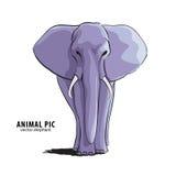 Illustratie van olifant Stock Afbeeldingen