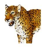 illustratie van Panthera Royalty-vrije Stock Foto