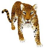 illustratie van Panthera Royalty-vrije Stock Fotografie