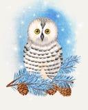 Illustratie van polaire uil Royalty-vrije Stock Afbeelding