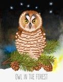 Illustratie van polaire uil Royalty-vrije Stock Foto's