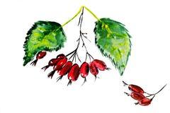 Illustratie van rijpe rode bessen Stock Afbeeldingen