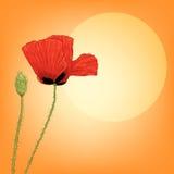 Illustratie van rode papaver Stock Afbeeldingen