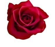 Illustratie van rode rozen (met netwerk) Royalty-vrije Stock Afbeeldingen