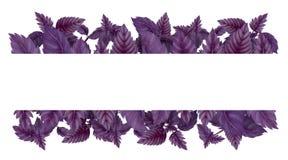 Illustratie van rood Basilicum Horizontale decoratie stock illustratie