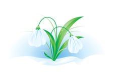 Illustratie van sneeuwklokjes Royalty-vrije Stock Afbeelding