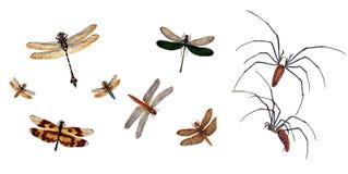 Illustratie van sprinkhanen en sprinkhanen, op een witte achtergrond Royalty-vrije Stock Fotografie