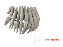 Illustratie van Teeths, geneeskunde en het element van het gezondheidsconceptontwerp Royalty-vrije Stock Fotografie