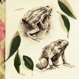 Illustratie van twee die kikkers in potlood worden getrokken vector illustratie