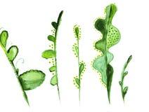 Illustratie van verschillende groene takjes van installaties Stock Afbeeldingen
