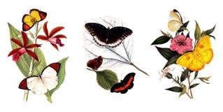 Illustratie van vlinders en installaties Stock Fotografie