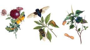 Illustratie van vlinders en installaties Stock Foto's