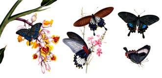 Illustratie van vlinders en installaties Stock Afbeeldingen