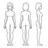 4 illustratie van vrouwelijk cijfer Stock Afbeelding