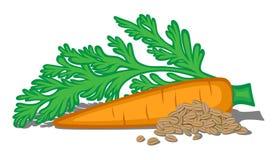 illustratie van wortelen Stock Foto's
