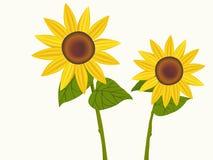 Illustratie van zonnebloemen in bloei Royalty-vrije Stock Foto's
