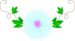 illustratie, vector, lichtblauw madeliefje op wijnstok met groene bladeren vector illustratie
