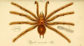 Illustraties van dier stock fotografie