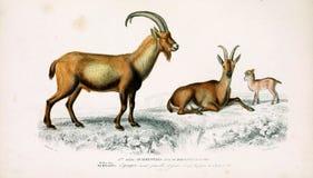 Illustraties van dier stock foto
